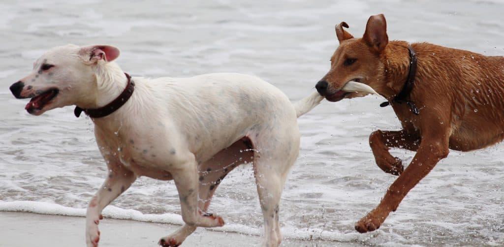 dogs [;aying
